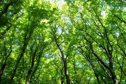 Wolin: Typische Buchenwälder im Nationalpark