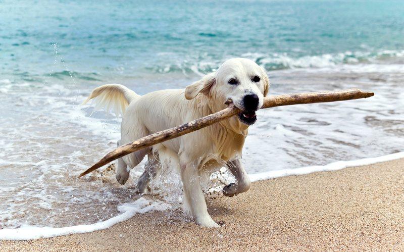 Hunde am Strand der Ostsee in Polen